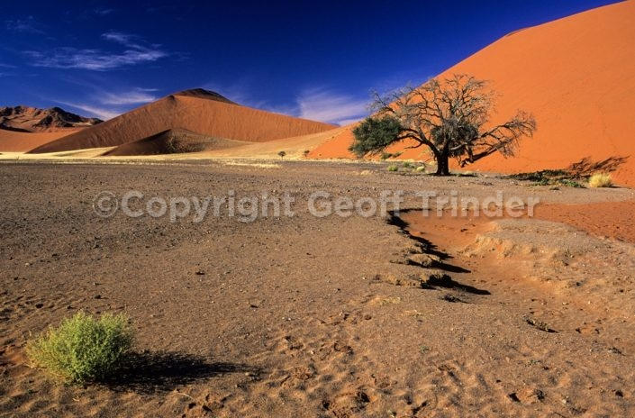 Dunes and Tree