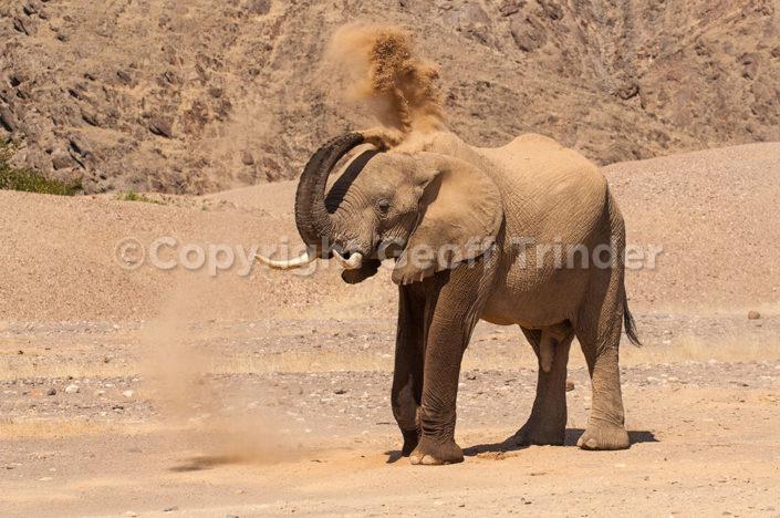 Desert Elephant, Nambia