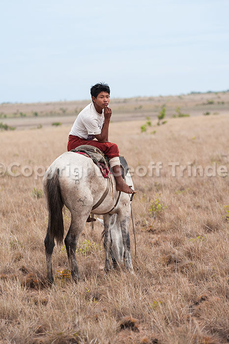 Guyana cowboy